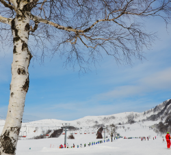 スキー日和です!