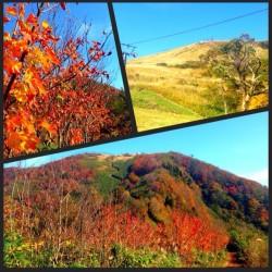 秋の行楽シーズンに♪(兵庫県の紅葉の穴場スポット)