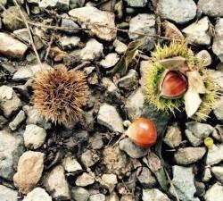 ハチ高原の秋の味覚②