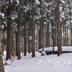 ハチ高原スキー場 積雪と駐車場情報