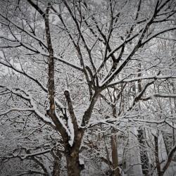 ハチ高原へのアクセス(積雪時)