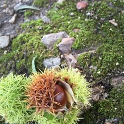 食欲の秋のハチ高原では・・・