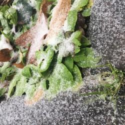 ハチ高原に初雪が降りました。