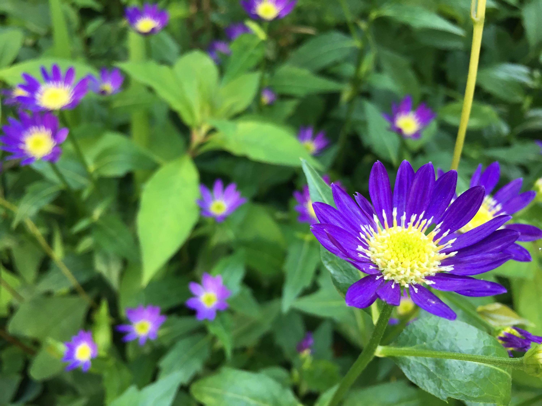 ハチ高原 梅雨の植物