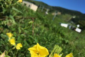 ハチ高原 夏合宿・研修旅行のベストシーズンです!