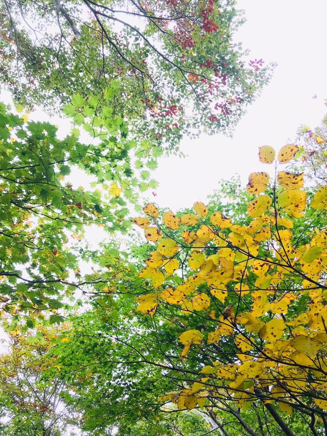 氷ノ山 ハチ高原 紅葉