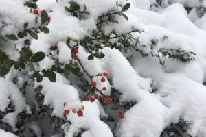 ハチ高原スキー場 12月8日(土)オープンです!