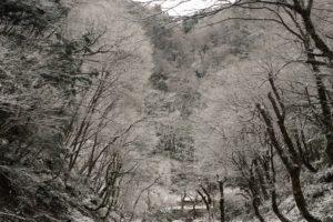 ハチ高原 今週のゲレンデと春スキーパックのご案内