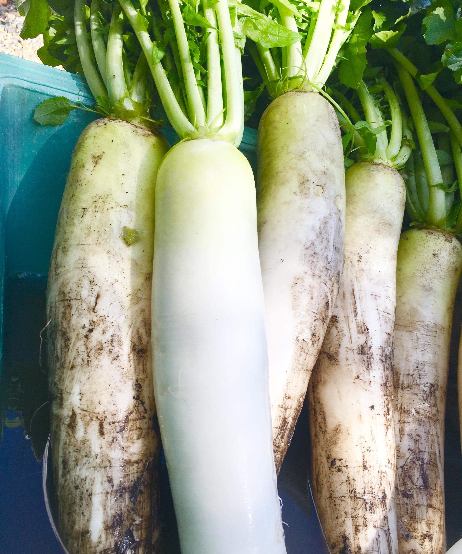 やまなみ 漬物 大根 白菜