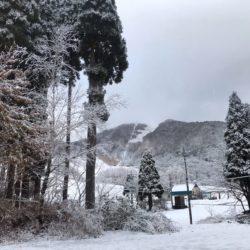 ハチ高原 雪が降り始めました