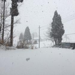 やっとまとまった雪が…