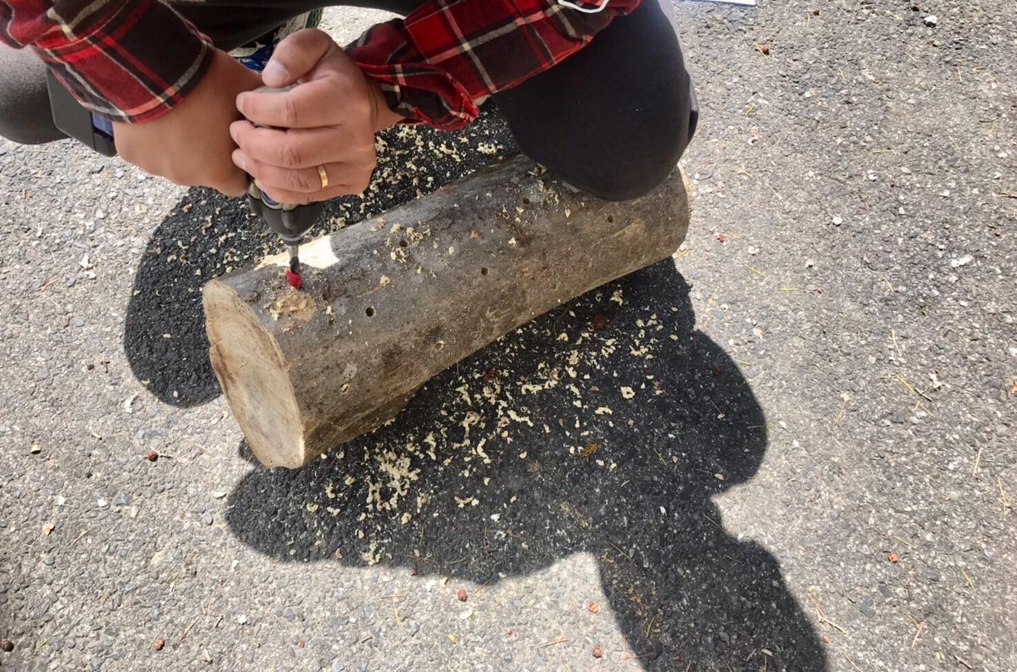 ハチ高原 きのこ 椎茸栽培