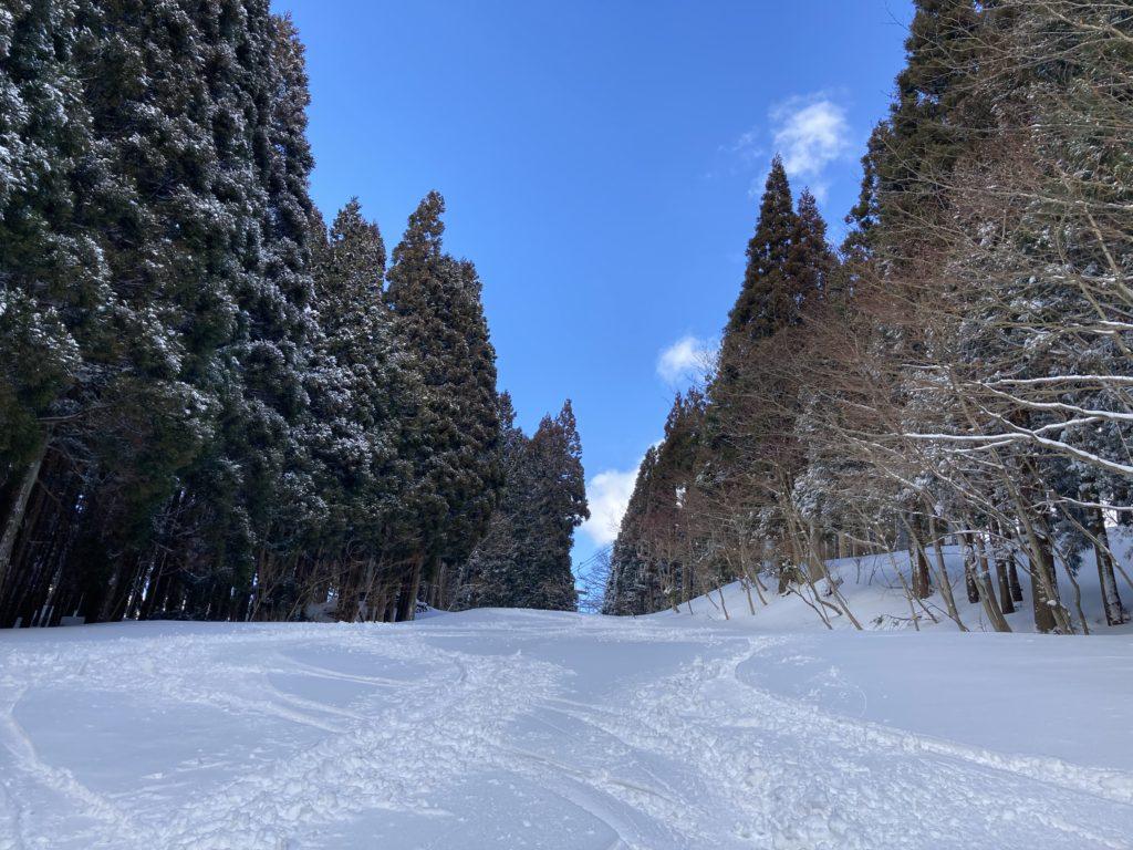 ハチ高原 スキー場 やまなみ 2月 ゲレンデ
