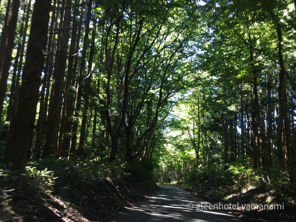 キャンプ アウトドア ハチ高原 ゴールデンウイーク 夏休み やまなみ